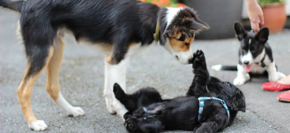 Tess Erngren, GoodDog, hund, kurs, hundekurs, valp, valpekurs, hundetrening, problemadferd, problematferd, positiv, hverdagslydighet, lydighet, hundepsykolog, yrkesutdanning, yrkesutdannelse, foredrag, hundetreff, hundepass, ferie, camp, klikker, privattrening, hundeinstruktør