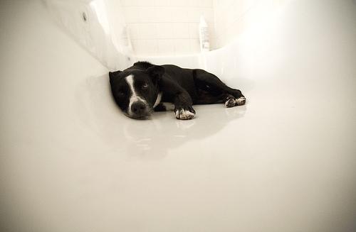 Nyttårsaften, i badekaret – som vanlig.
